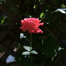 Load image into Gallery viewer, High Garden Rose