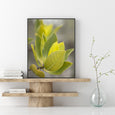 Looking for that tranquil feeling?  I sure am, and look what I've found! This beautiful Australian foliage from Awinya Creek, Fraser Island. A relaxed soft botanical print, photographed softly to bring calmness into your home.