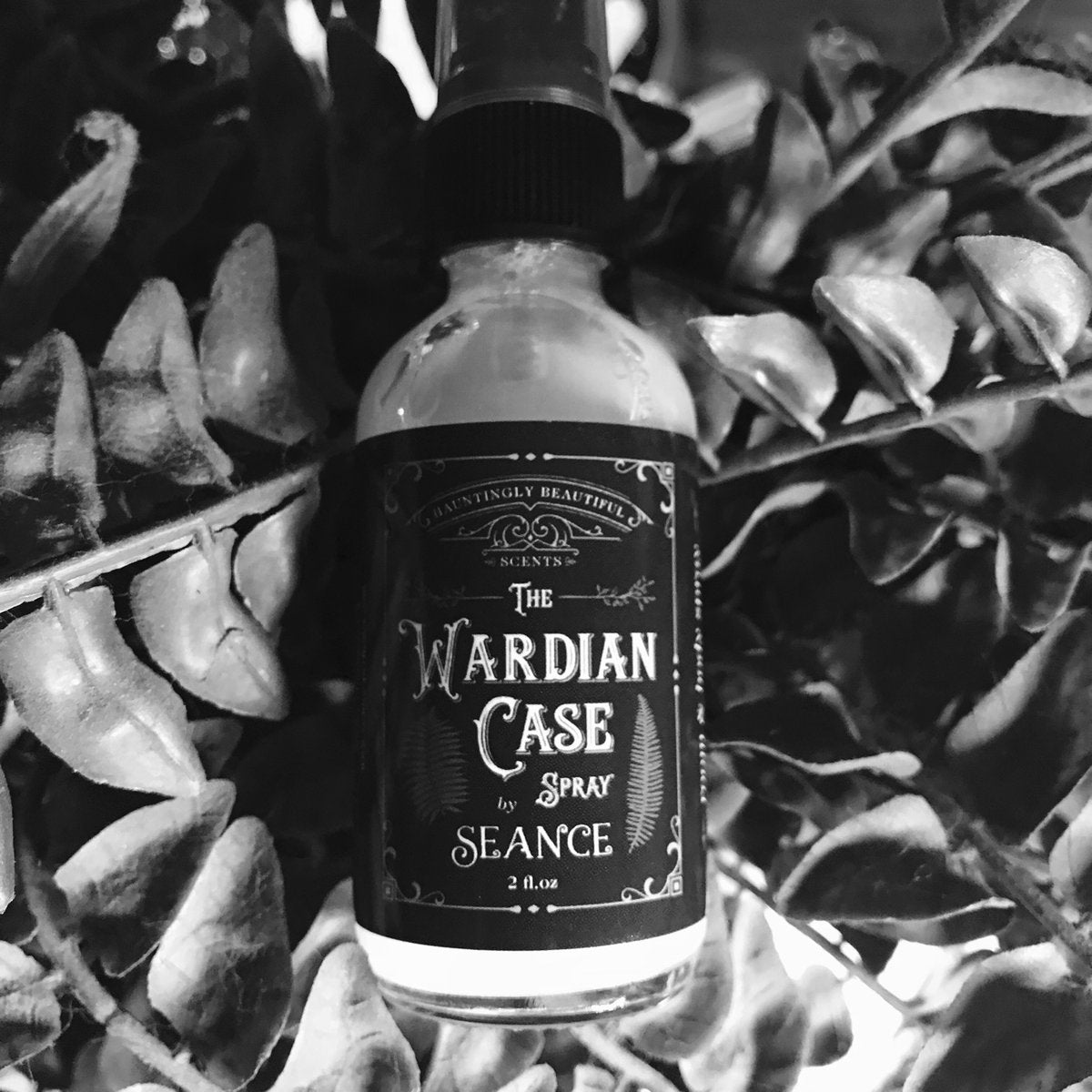 The Wardian Case Spray (Fern)