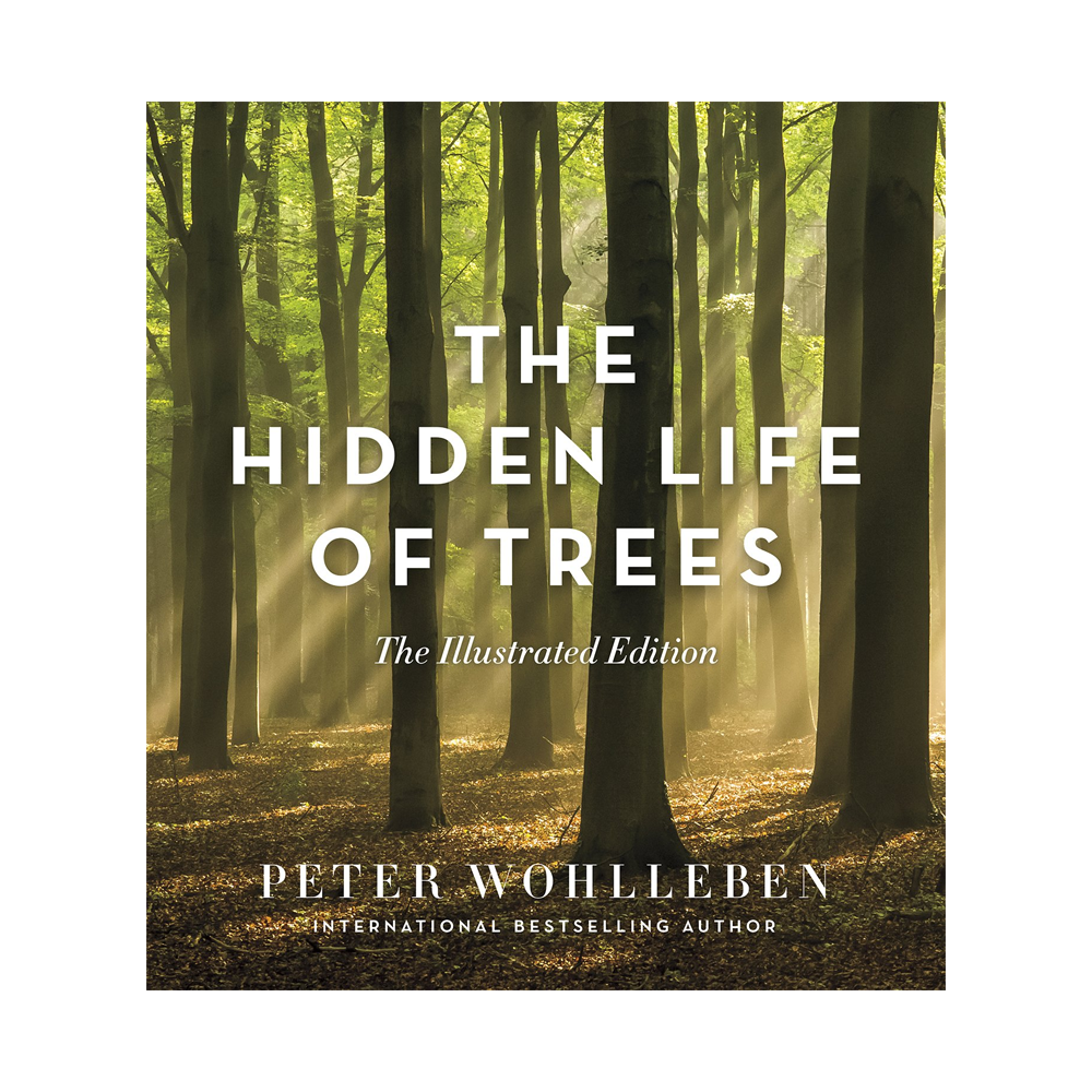 Hidden Life of Trees (illustrated)