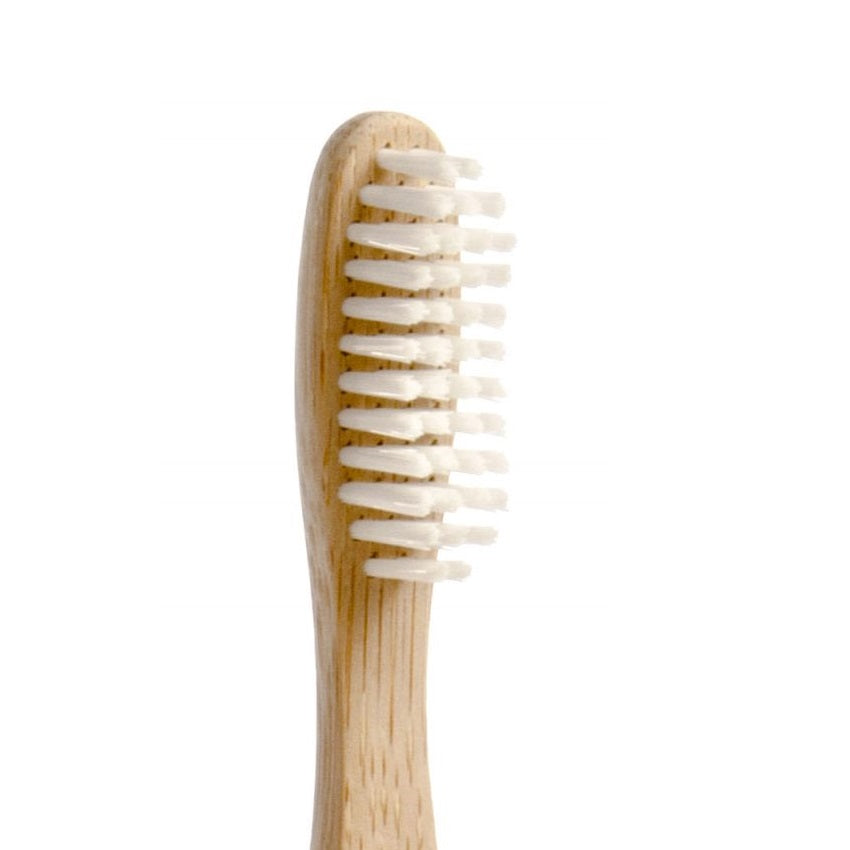 Amazing Brush with bamboo toothbrush plant derives bristles