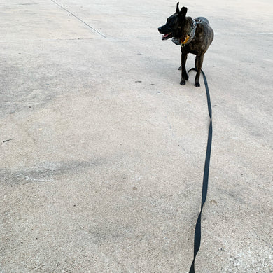 extra long leash / 15'