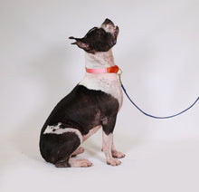 Load image into Gallery viewer, martingale collar / pink + orange