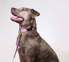 Load image into Gallery viewer, martingale collar / merlot + lilac