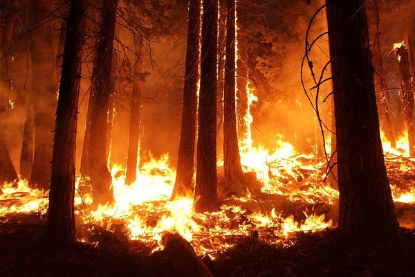 Is Climate Change Behind the Recent Devastating Wildfires?