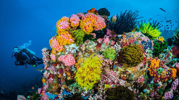Why coral reefs are so important.