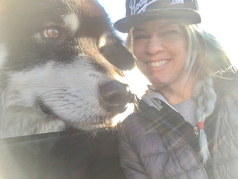 Alaskan Malamute, puppy adventures