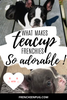 What makes micro, mini, miniature and teacup Frenchies so adorable?