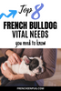 Top 8 French bulldog vital needs you need to know