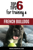 Top 6 tips for training a French bulldog