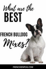 What are the best French bulldog mixes?