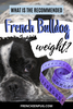 What is the recommended French bulldog weight?