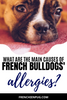 What are the main causes of French bulldogs allergies?
