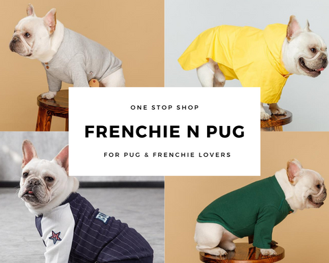 Frenchie N pug Banner