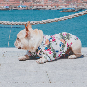 Summer shirt for french bulldogs - Frenchie N Pug