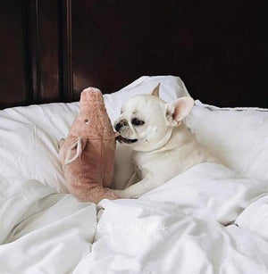 Pig Sleeping Partner French Bulldog Toy - Frenchie N Pug