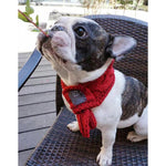 #MadeWithLove Warm Winter Scarf for small dogs - Frenchie N Pug