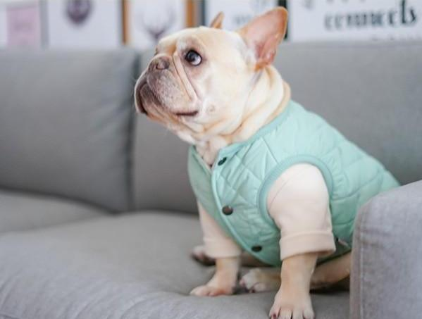 Haute Couture Baby Vest - Frenchie N Pug