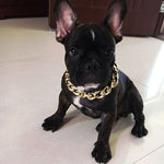 The Golden Boss Chain - Frenchie N Pug