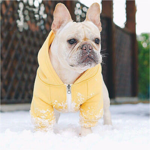 The Hooded Head-Turner Jacket - Frenchie N Pug