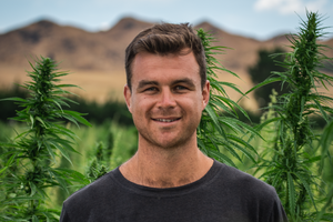 Our Co-Founder Brad's Opinion Letter on the Cannabis Referendum.