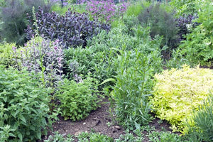 Top 40 Medicinal Herbs to Grow at Home