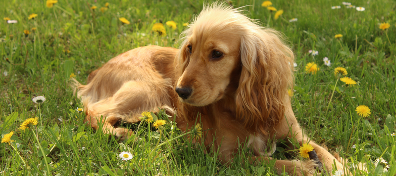 Top 10 Ways To Prevent Fleas On Your Dog And From Your Home