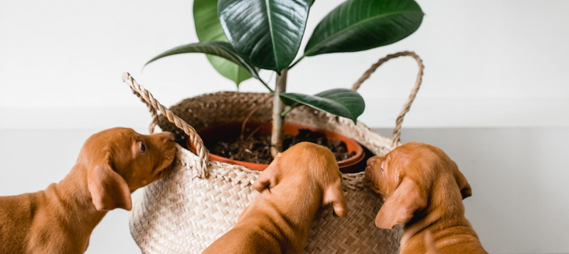 Top 10 Pet Friendly Indoor Plants