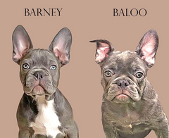 Barney & Buddy Personalised Pet Print
