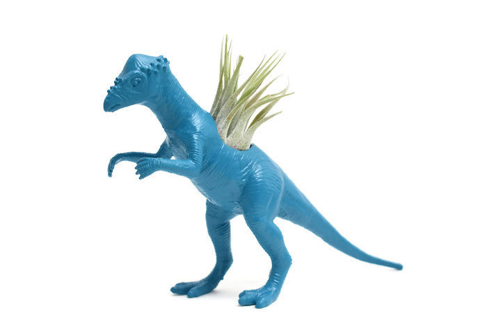 Blue Pachycephalosaurus - Wild Child