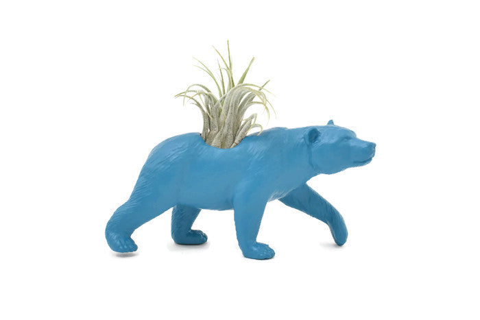 Blue Bear - Wild Child