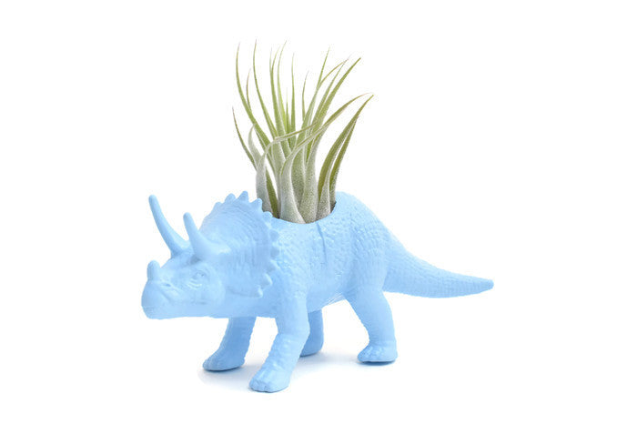 Light Blue Triceratops - Wild Child