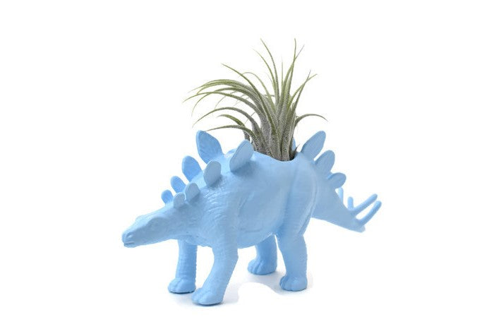 Light Blue Stegosaurus - Wild Child
