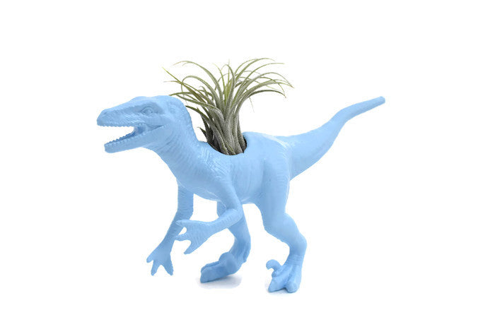 Light Blue Velociraptor - Wild Child