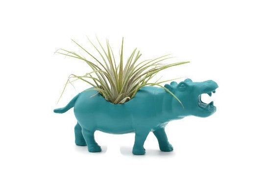 Blue/Green Hippopotamus
