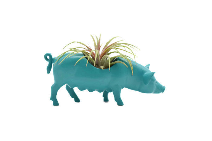 Blue/Green Pig - Wild Child