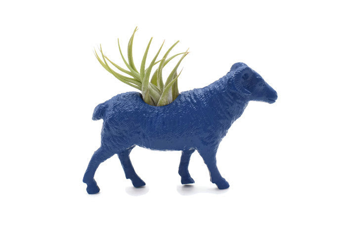 Dark Blue Sheep