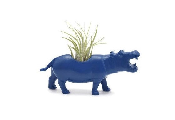 Dark Blue Hippopotamus
