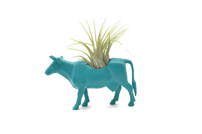 Blue/Green Cow