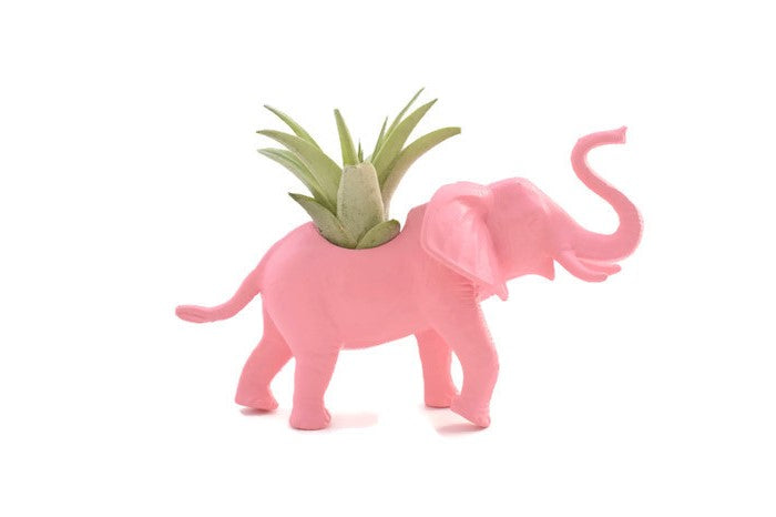 Light Pink Elephant - Wild Child