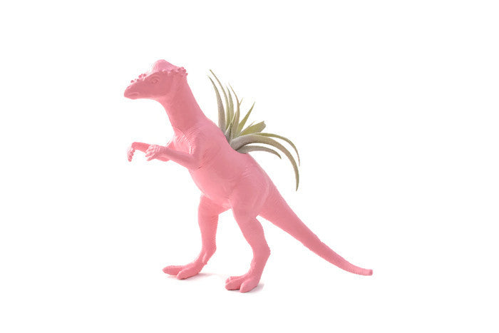 Light Pink Pachycephalosaurus - Wild Child