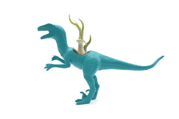 Blue/Green Velociraptor - Wild Child