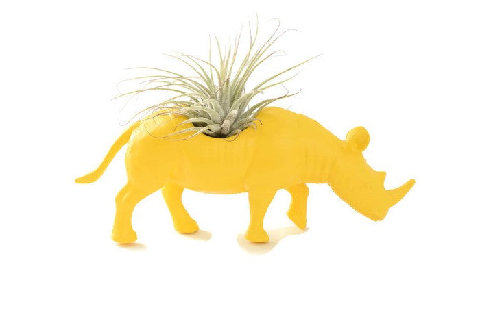 Yellow Rhinoceros - Wild Child