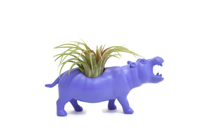 Light Purple Hippopotamus - Wild Child