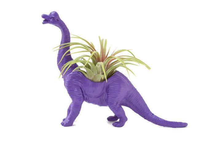 Purple Brachiosaure - Wild Child
