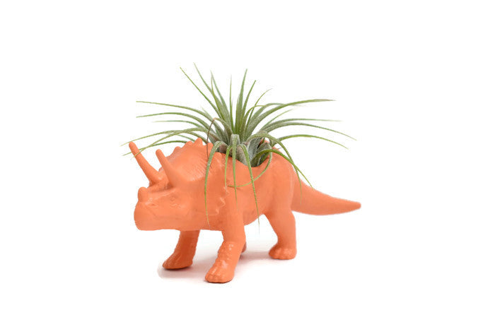 Orange Triceratops - Wild Child