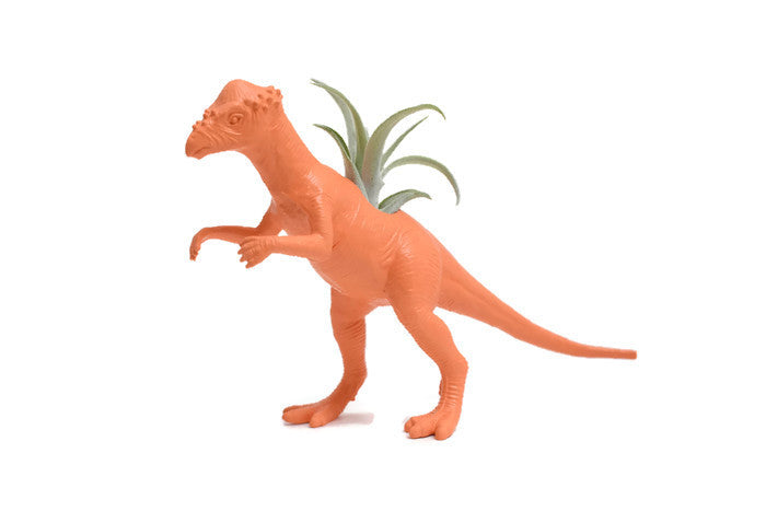 Orange Pachycephalosaurus - Wild Child