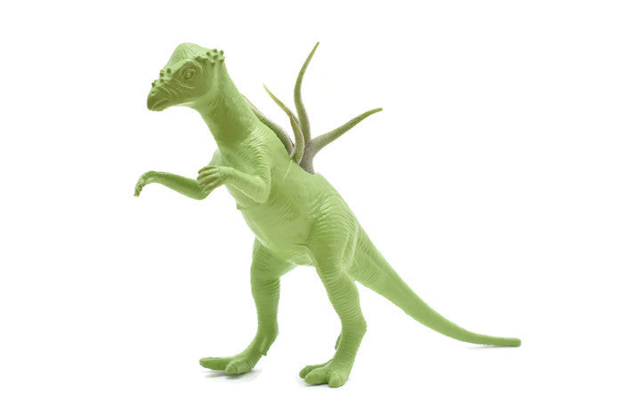 Light Green Pachycephalosaurus - Wild Child