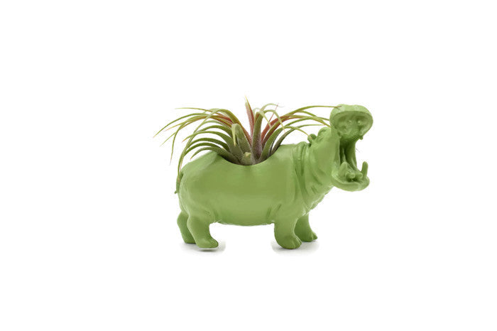 Light Green Hippopotamus - Wild Child