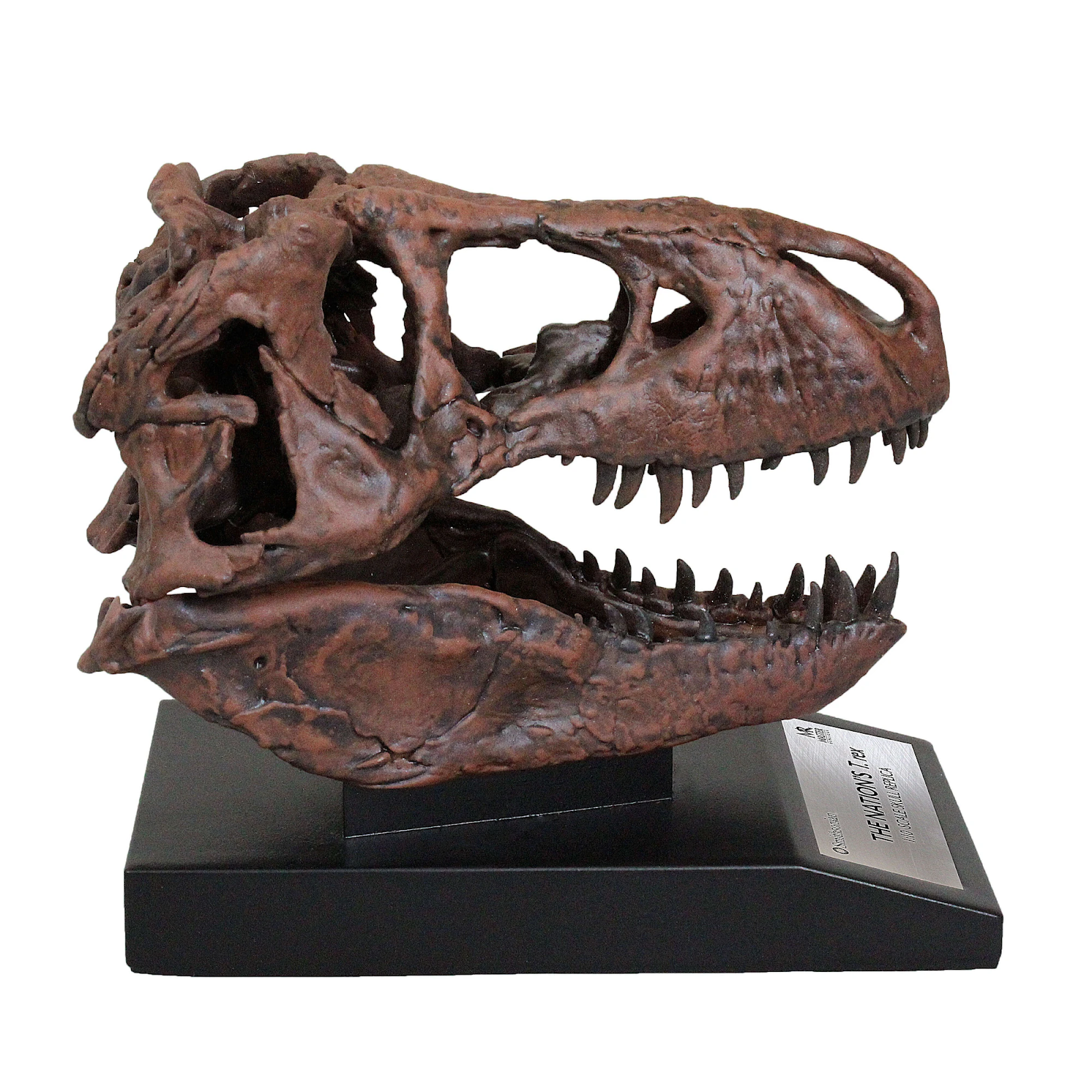 10th Scale Smithsonian Nation's T. rex Skull Fossil Replicas Now in Stock